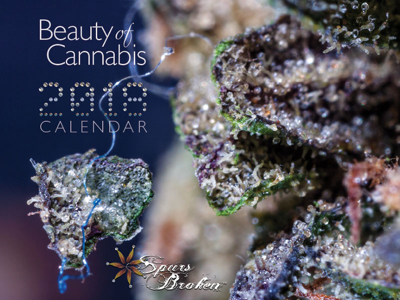 Cover Image of The Beauty of Cannabis Calendar - 2018